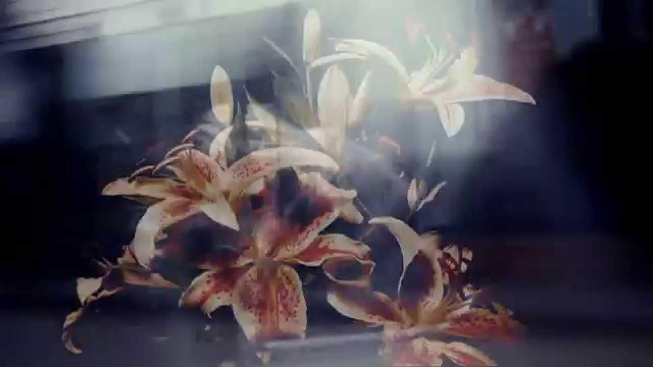 Brené Brown – Sterker Dan Ooit
